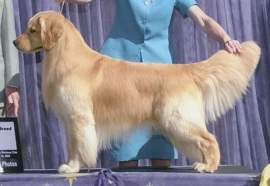 Grooming on 10 month old puppy