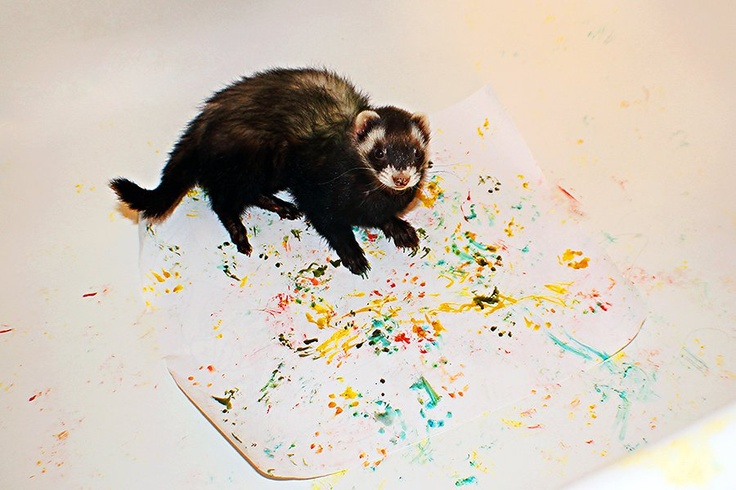 Little Ferret Art! I set him in the bathtub with paper & food coloring & let him walk around on it.