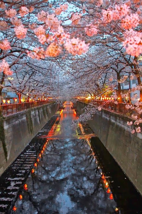 New Wonderful Photos: Cherry Blossom River, Kyoto, Japan