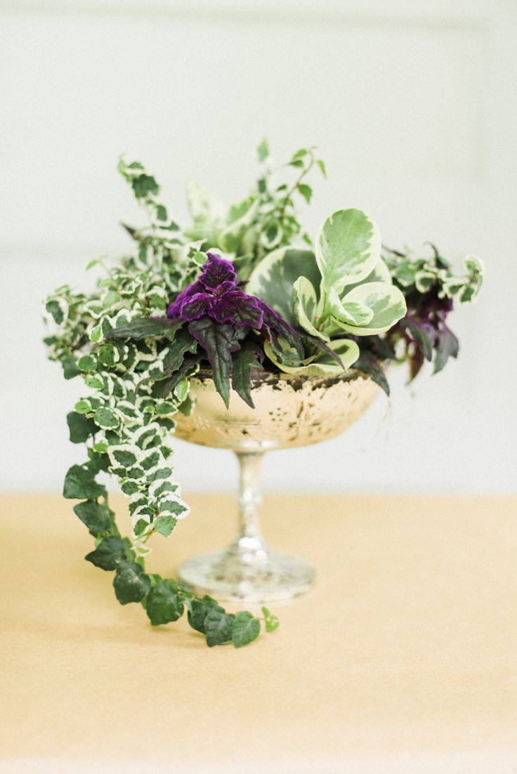 #DIY Living Plant Centerpieces | Photography: Krista A. Jones - www.kristaajones.com  Read More: http://www.stylemepretty.com/2014/06/11/diy-living-plant-centerpieces/