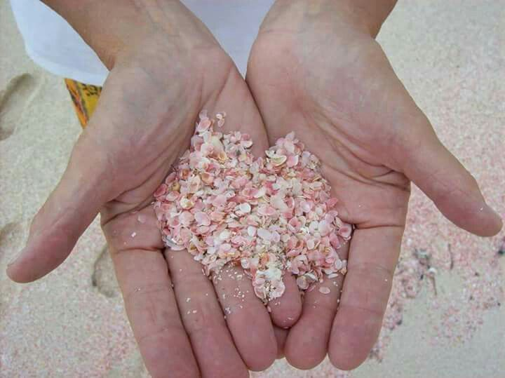 Pink Sands Beach on Harbour Island, Bahamas