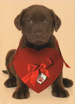 Nothing says love like a lab!  Umm if this was my valentines day gift someday... I would literally be speechless and then cry and it would be from a man who knows how to get to my heart :-D