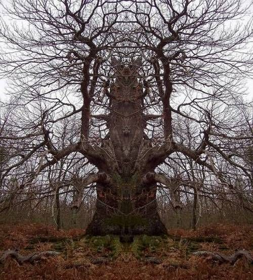 """HOAX ... This one is an obvious mirror image to form a """"Totem Tree""""...  pretty kewl tho"""