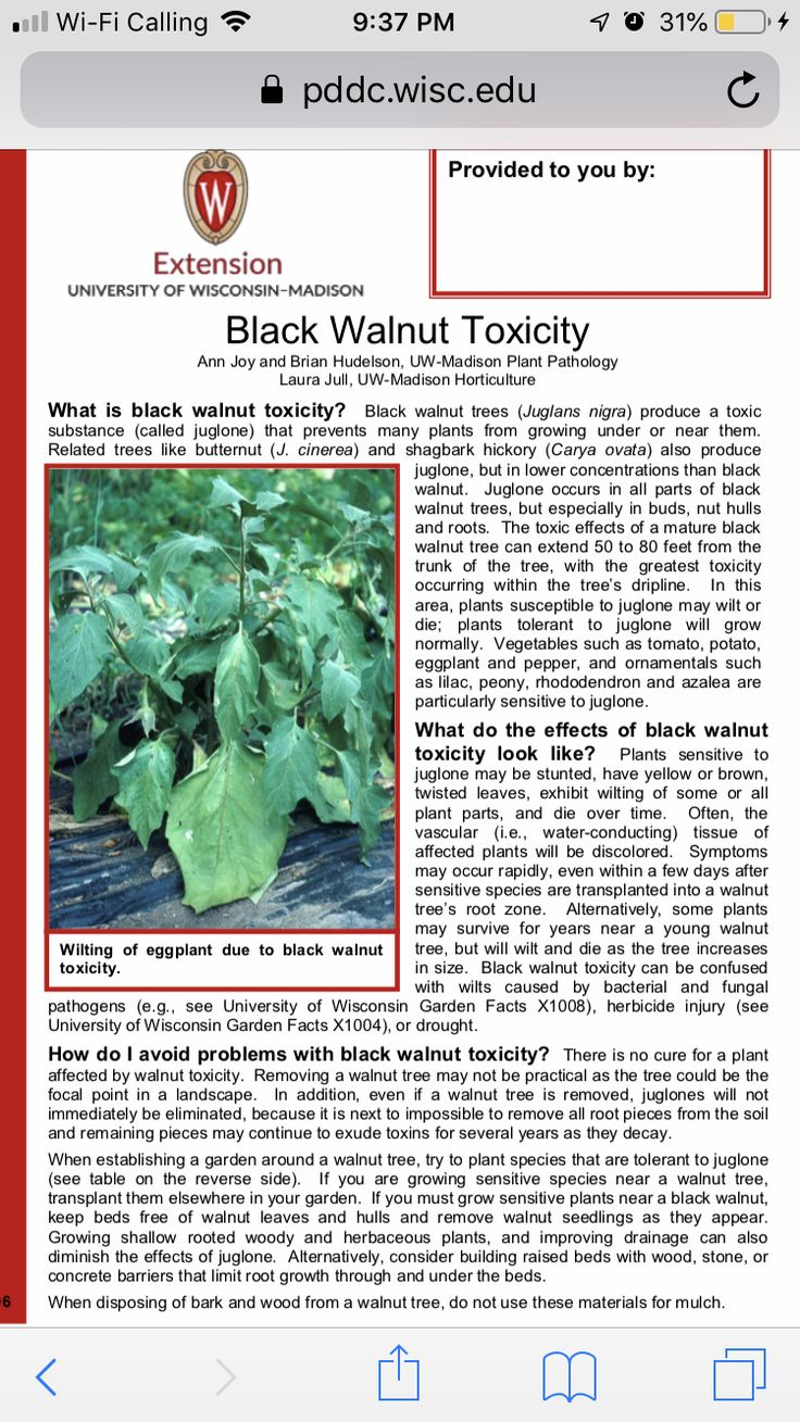 Pin by Erin Lindell on Gardening Black walnut tree
