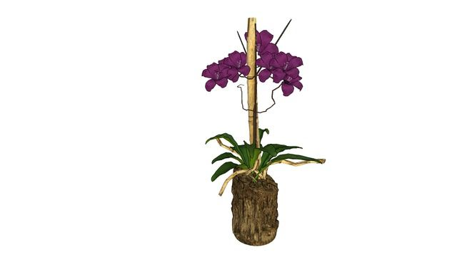 Arranjo orquidea - 3D Warehouse