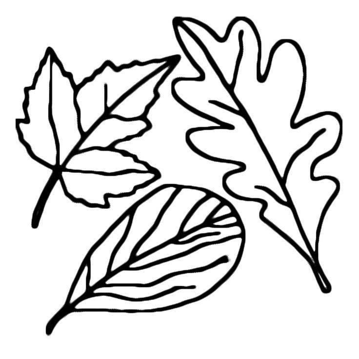coloriage feuille dautomne dessin 3