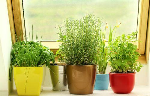 Pořiďte si za okno bylinky – COOP Club
