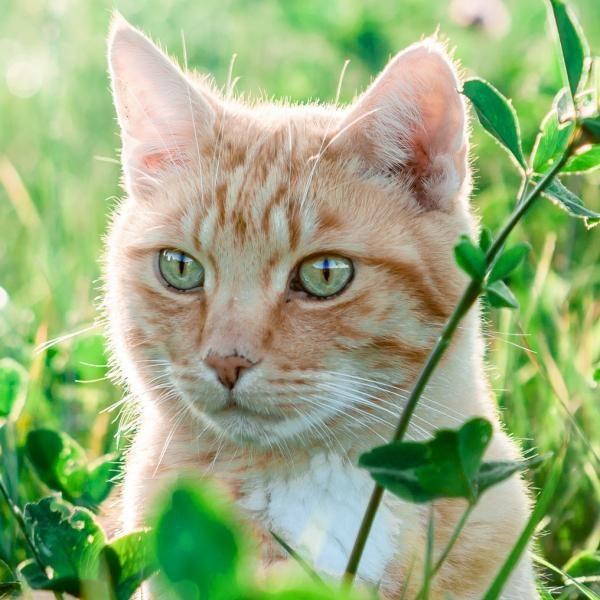 Mi gato tiene caspa - Causas y soluciones - ExpertoAnimal