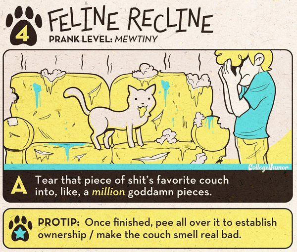 http://www.collegehumor.com/article/6760974/cool-pranks-for-cats