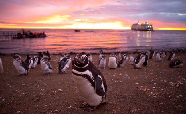 Punta Arenas-Punta Arenas (3 nights)