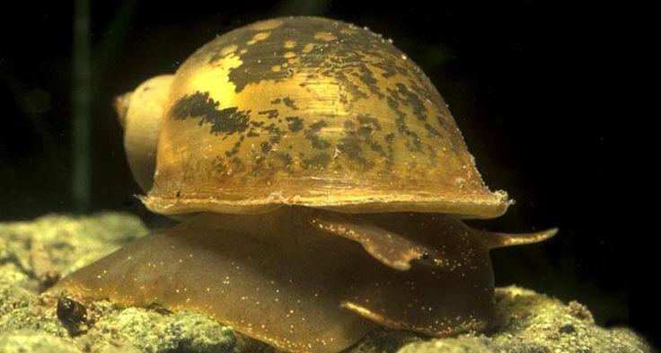 Bolder snails grow stronger shells | Grow strong, Snail, Tough