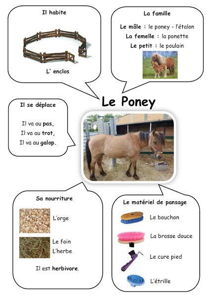 Carte d 39 identit du poney ecole animaux carte d - Jeux de poney ville gratuit ...