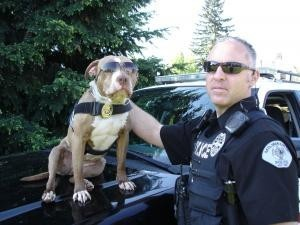 Shaka the police pit bullPitti, Animal Rescue, Heroes, Bull Terriers, Cops, The Police, Pitbull, Pit Bull, Police Dogs
