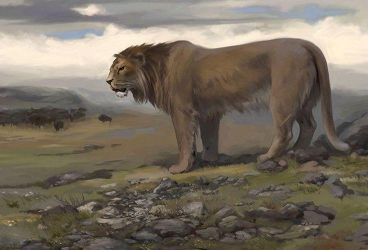 Cave Lion   Panthera leo atrox