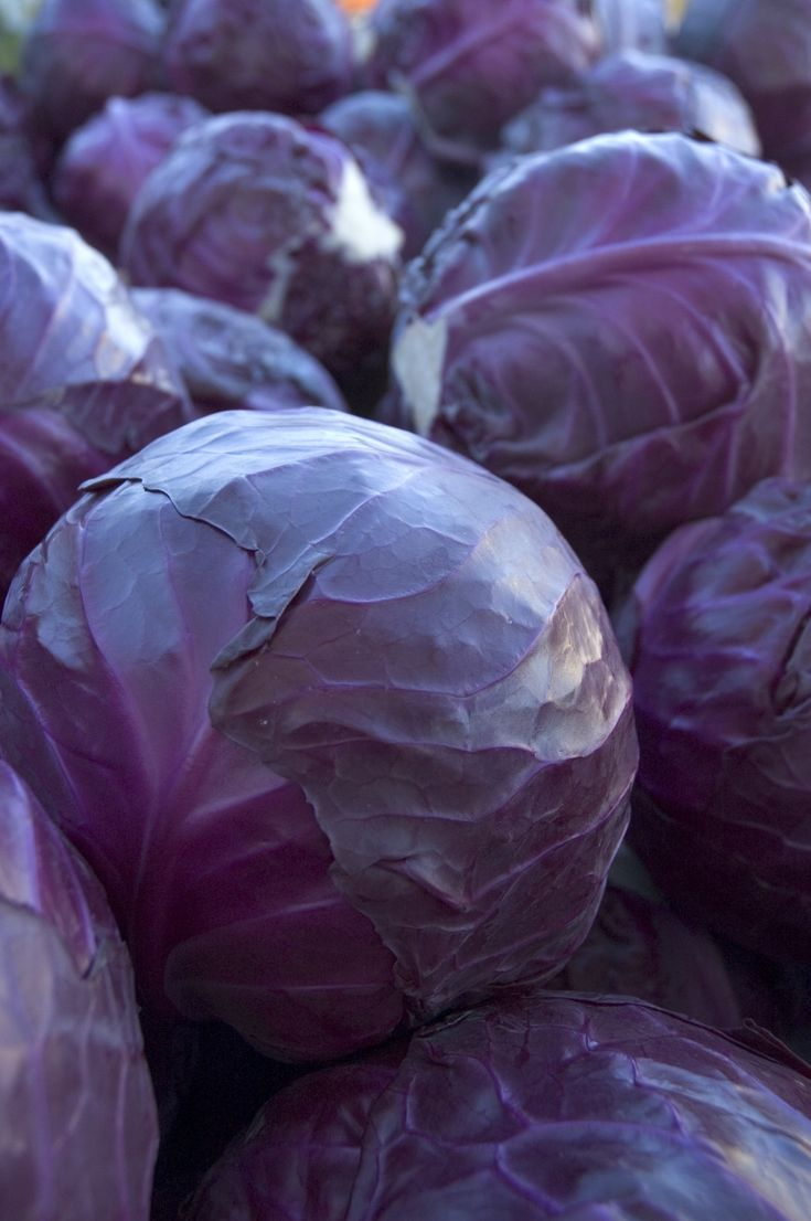 Possibly The Prettiest Food In World I Should Eat More Of Red Kind Cabbage