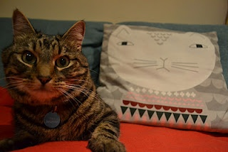 My brown tabby cat Waffles guards his Donna Wilson 'Mog' cushion.