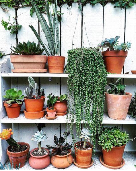 Urban jungle planten verzameling met een 'String of Pearls' plant. // via The Jungalow