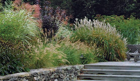 65 best images about using ornamental grasses on pinterest for Large grasses for landscaping