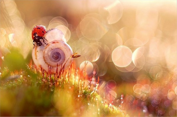 Find the beauty in little things!Photos, Stunning Photography, Magda From Czek, Macro Photography, Magic Gardens, Ladybugs, Magdalena Wasiczek, Lady Bugs, Nature Beautiful