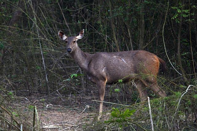 Gumti Wildlife Sanctuary - in Tripura, India