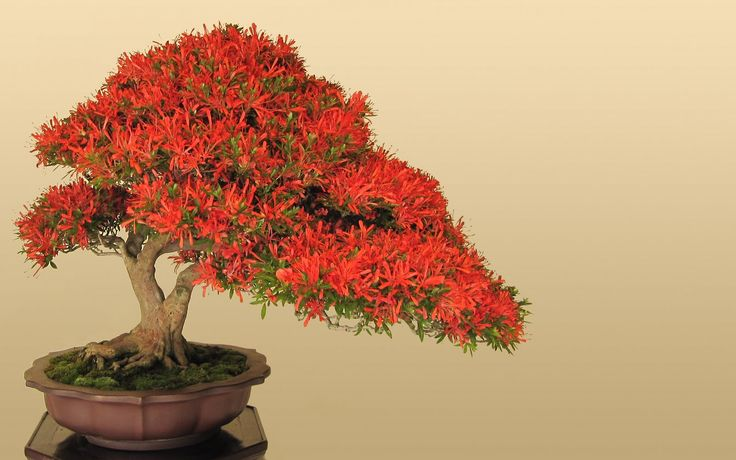 the art of bonsai trees - Google Search
