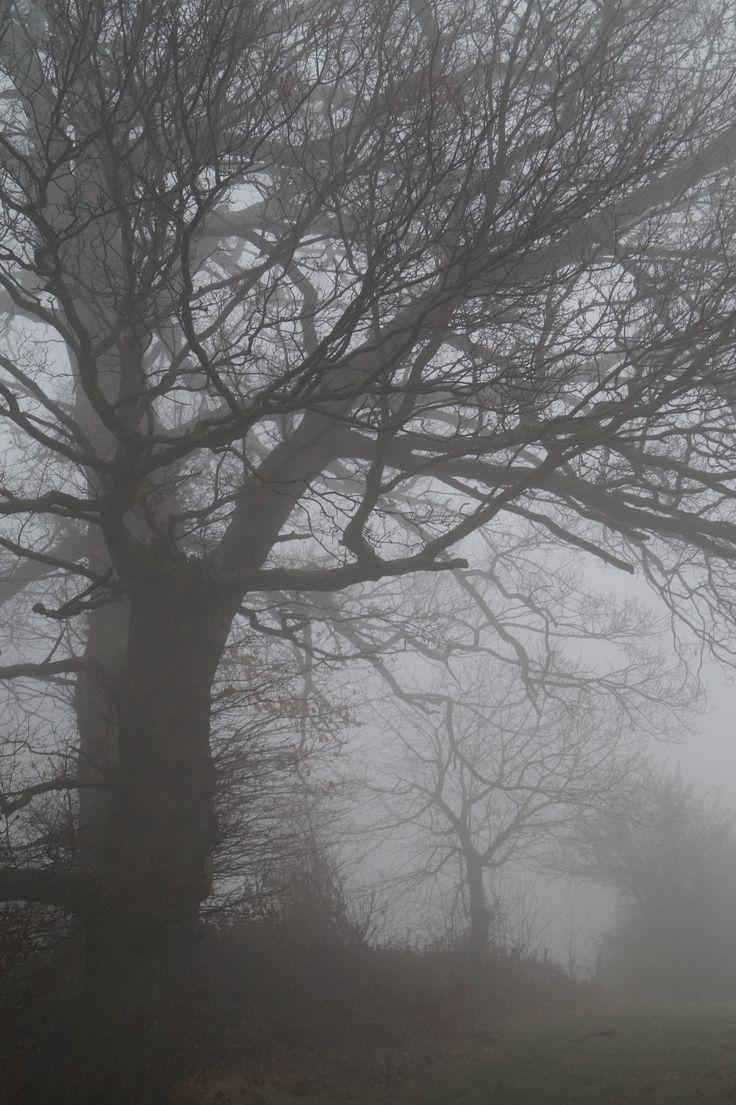 Nebel Foto: Stephanie Limberg