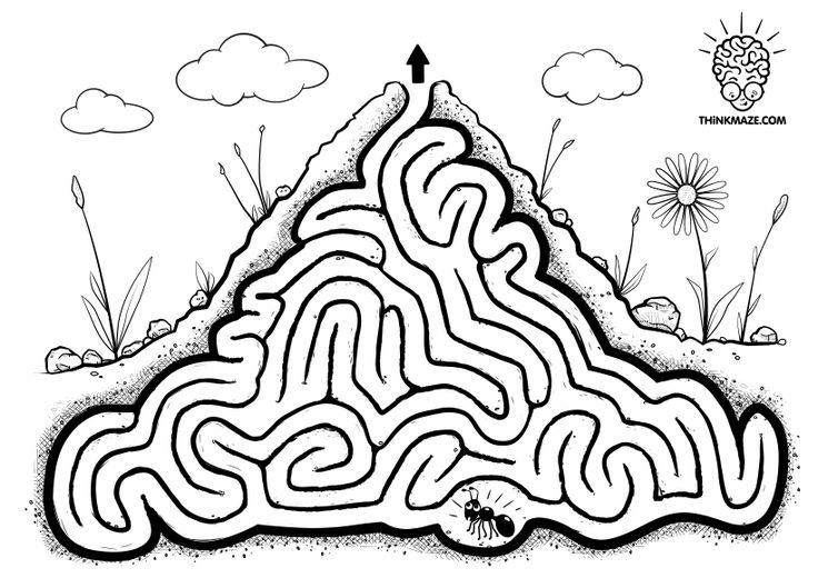 crazy ant free maze  labyrinty mraveniště a hmyz