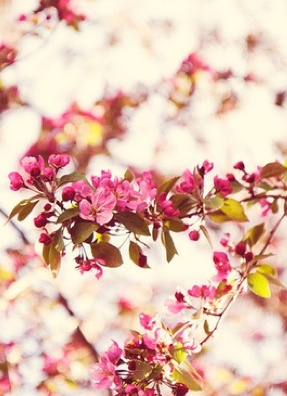 pink and yellowNature, Photos Con, Flowers, Flower, Floral, Yellowpink