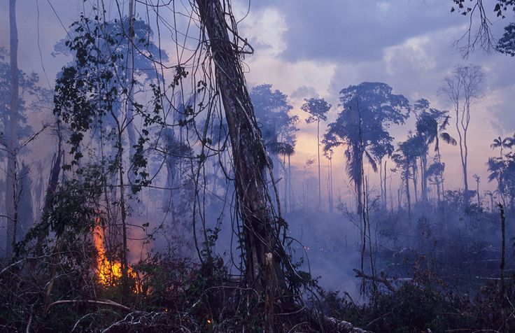 Climate change and industrial activity are wiping out large sections of the Amazon. You might not realize how much this deforestation could affect you.