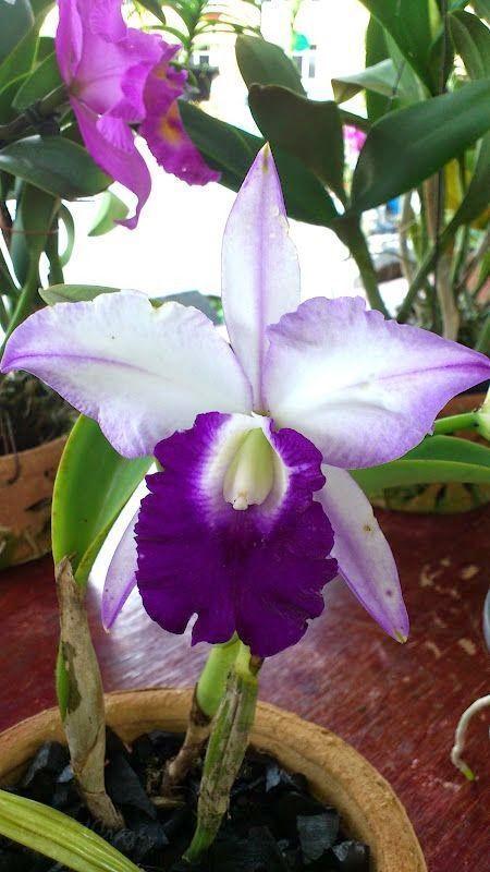 Imagem de hawaii, lavender, and orchid                                                                                                                                                                                 Mais