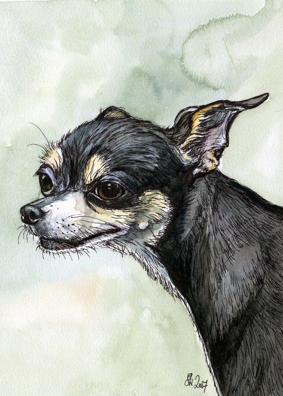A Little Weasely  Chihuahua Dog Print by AlmostAnAngel66 on Etsy, £12.00