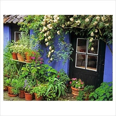 I have always wanted a house this color, instead I settle for morning glories this color on a brick house.....