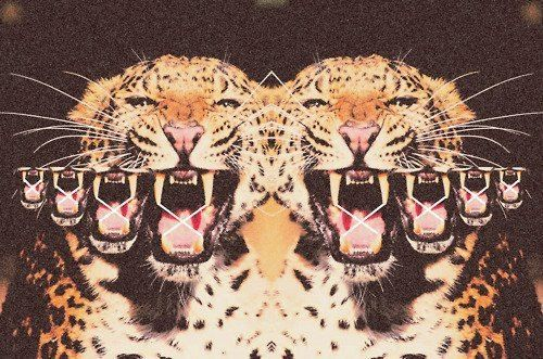 animals, leopards: Big Cat, Wild Cat, Photography Backgrounds, Cat Meow, Digital Art, Mirror Image, Tigers Photography, Animal Photos, Bigcat