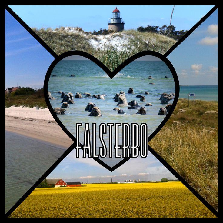 Chciałbyś poczuć się jak na planie filmowym National Geographic? W takim razie jedź do Falsterbo i zobacz całe stado fok w ich naturalnym środowisku!