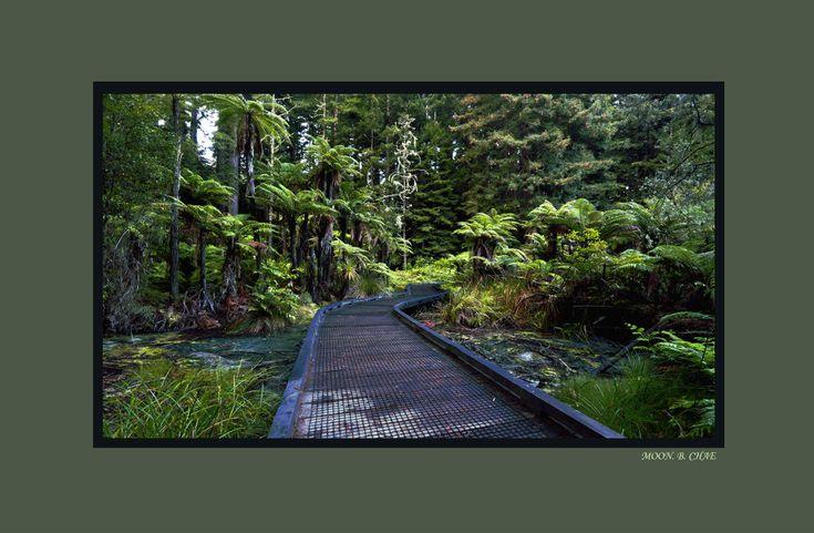 BRIDGE IN FOREST by moonchae71