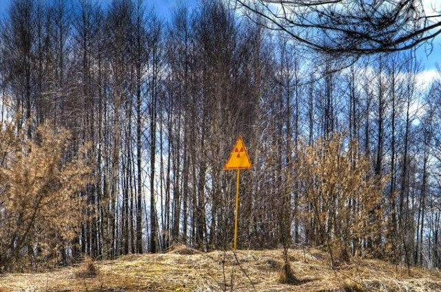 """The dead trees and fallen leaves near Chernobyl aren't decaying."" http://www.iflscience.com/environment/dead-trees-and-fallen-leaves-near-chernobyl-aren%E2%80%99t-decaying (image by Timm Suess via Wikimedia)"