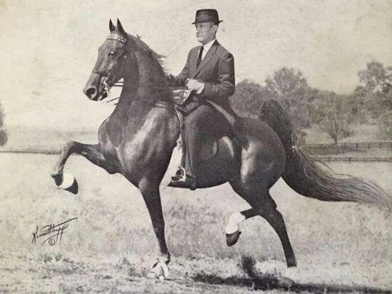 36 Best Saddlebreds Images On Pinterest American Saddlebred Horse And Horses