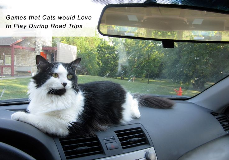 Can You Guess The #Games Your #Kitty Would Love To #Play During #RoadTrips? -