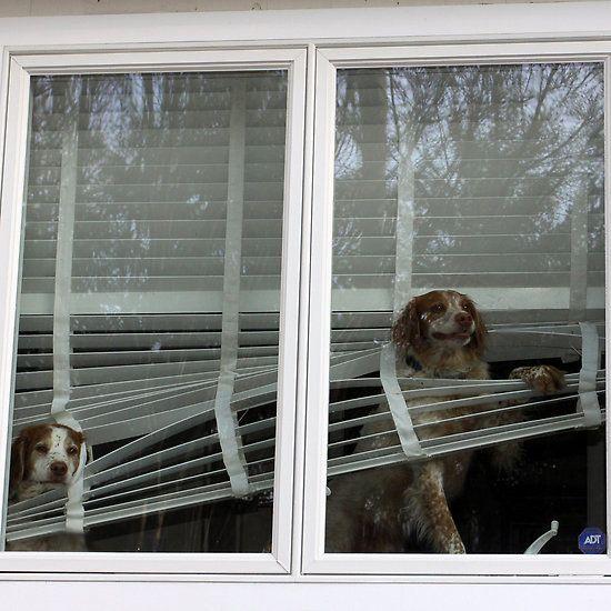 23 Best Window Treatment Memes Images On Pinterest Memes