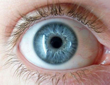 Scientist: All Blue-Eyed People Are Related | Fox News.  Everyone with blue eyes alive today – from Angelina Jolie to Ayatollah Yazdi, minister of justice of Iran – can trace their ancestry back to one person who lived about 10,000 years ago in the Black Sea region, a study published in the journal Human Genetics has found.