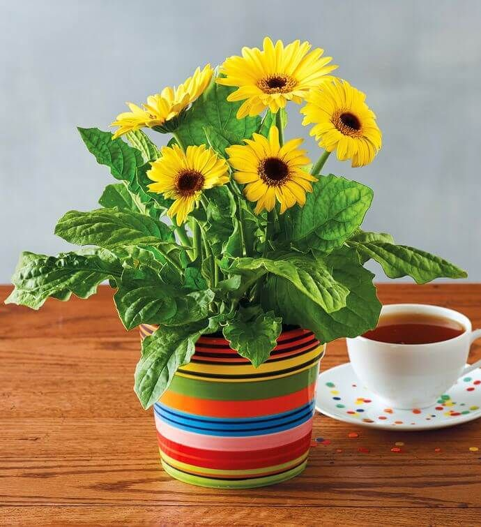 Coffee For Your Head Ne Demek