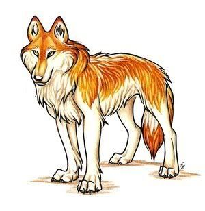 Orange Wolf Drawing 113 best images about ...