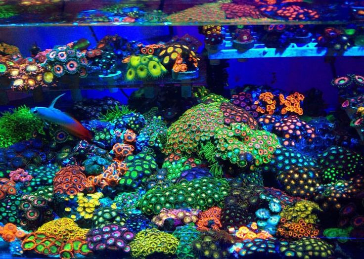 1073 best reef tanks images on pinterest fish aquariums for Marine fish tanks
