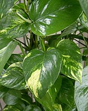 house plants identify by pic name this plant game house plants 3 - House Plants Identification Pictures