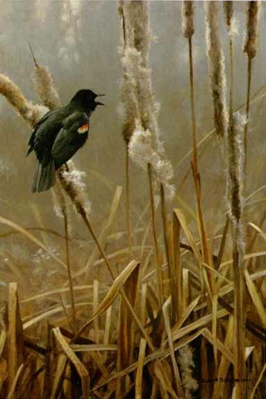 Robert Bateman Winter Cattails Red-winged Blackbird