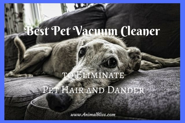 Dog hair and dander can cause allergies and breathing problems and aggravate existing health issues as well, which is a serious concern. If you do have a problem with dog hair, consider purchasing the best pet vacuum cleaners on the market. It's so much more than your regular vacuum cleaner. Here's why.