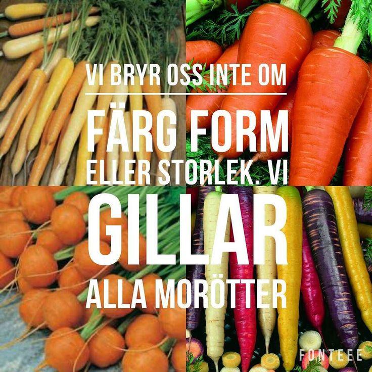 Vi nåt för alla smaker! Sök på morot i vår webbshop och få upp 46 olika alternativ på fröer till fantastiska sorter. #wexthuset  #word #morötter #carrots #grönsaker #rotfrukter #odlaeget #hemodlat #allakanodla #nyttigtgodis #colorfulfood #egenodlat