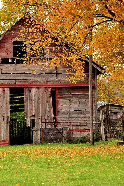 : Fall Leaves, Autumn Leaves, Rustic Charms, Country Living, Autumn Barns, Autumn Look, Red Barns, Rustic Barns, Old Barns