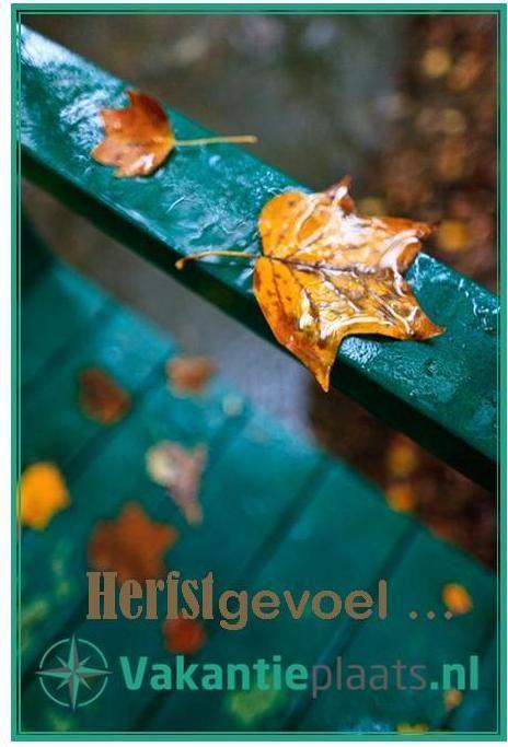 #Herfstgevoel ... vandaag was de eerste dag dat ik dat echt had. Nu gezellig binnen met een kopje #thee. http://www.vakantieplaats.nl #herfst #weer