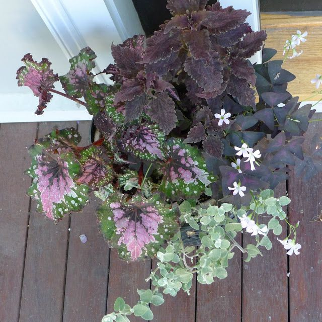 138 Best Images About Purple/maroon Colored Flowers On
